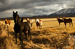 horse farms for sale horse horse ranches 240x159