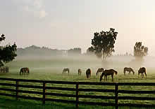 Search Horse Ranches For Sale