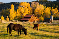 Ranches for sale in canada